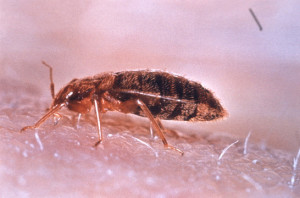 bed bug control winnetka ca